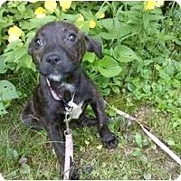 Adopt A Pet :: Jaden - Raymond, NH
