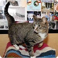 Adopt A Pet :: Pepper - Farmingdale, NY