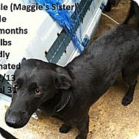 Adopt A Pet :: Miracle (PENDING!) - Chicago, IL