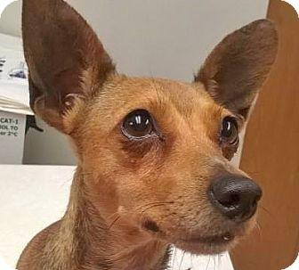 Terrier (Unknown Type, Small) Mix Dog for adoption in Spokane, Washington - Abi