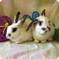 Adopt A Pet :: Sarasota - Paramount, CA