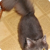 Adopt A Pet :: Murf (special needs) - Chattanooga, TN