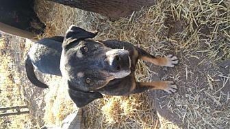 Treeing Walker Coonhound Mix Dog for adoption in Tuttle, Oklahoma - Pops