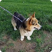 Adopt A Pet :: Stumpy - Albemarle, NC