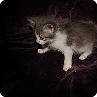 Adopt A Pet :: Victoria - Monroe, NC