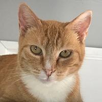 Adopt A Pet :: Peaches - Santa Monica, CA