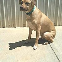 Adopt A Pet :: Reagan - Kittery, ME