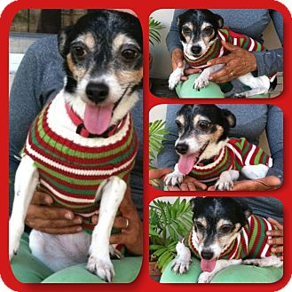 Terrier (Unknown Type, Small) Mix Dog for adoption in Coral Springs, Florida - Mocha
