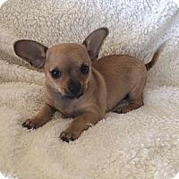 Adopt A Pet :: Jenny - Tustin, CA