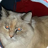 Adopt A Pet :: Krissy - Columbus, OH