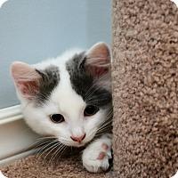 Adopt A Pet :: Squeaks - Douglas, ON