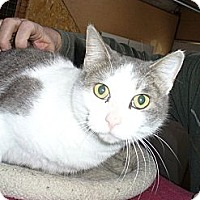 Adopt A Pet :: Sabrina - Bentonville, AR