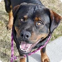 Adopt A Pet :: Ivan - Meridian, ID