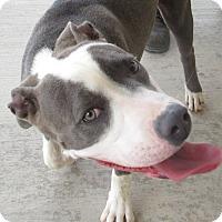 Adopt A Pet :: Isabelle - Sierra Vista, AZ