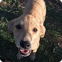 Adopt A Pet :: Hera - New York, NY
