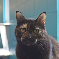 Adopt A Pet :: Sheila - House Springs, MO