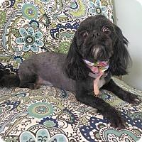 Adopt A Pet :: Priincess - Lawrenceville, GA