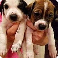 Adopt A Pet :: Buddy and Bob - Westwood, NJ