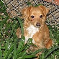 Adopt A Pet :: TANGO - Wilmington, DE
