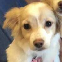 Adopt A Pet :: Louise - Las Cruces, NM