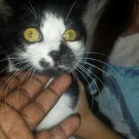 Adopt A Pet :: yoda - St. Thomas, VI