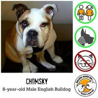 Adopt A Pet :: Chomsky - Everett, WA