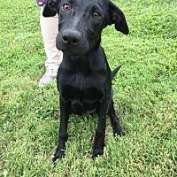 Adopt A Pet :: Mercedes - Batavia, OH