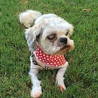 Adopt A Pet :: Gismo - Alpharetta, GA