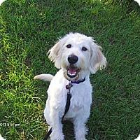 Adopt A Pet :: Ally - Jacksonville, FL