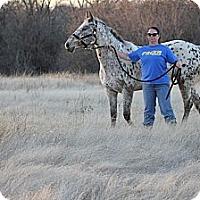 Adopt A Pet :: Arabelle - Farmersville, TX