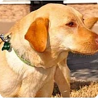 Adopt A Pet :: Hazel - Arlington, TX
