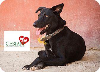 Labrador Retriever Mix Dog for adoption in Calgary, Alberta - JENNY