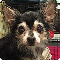 Adopt A Pet :: Precious - geneva, FL