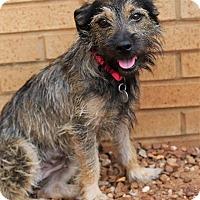 Adopt A Pet :: Jessie Belle - Knoxville, TN