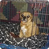 Adopt A Pet :: DYLAN - Morris, IL