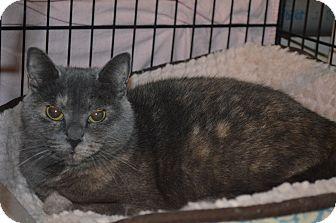Calico Cat for adoption in Toast, North Carolina - Violet