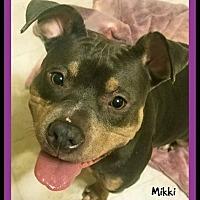 Adopt A Pet :: Mikki - Memphis, TN