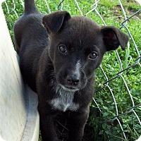 Adopt A Pet :: Jaxson - Waller, TX