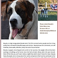 Adopt A Pet :: BEAUTY - Sparks, NV