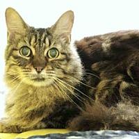Adopt A Pet :: KATE - Plano, TX