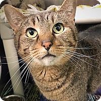 Adopt A Pet :: Elka - Negaunee, MI