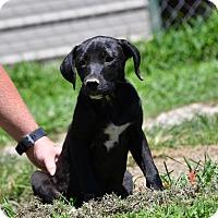 Adopt A Pet :: Becca - South Dennis, MA
