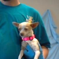 Adopt A Pet :: 35861242 - Los Lunas, NM
