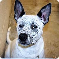 Adopt A Pet :: Sammy - San Jacinto, CA