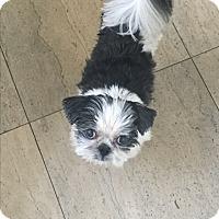 Adopt A Pet :: Mickey - Brea, CA