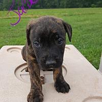 Adopt A Pet :: Jacob - Niagra Falls, NY