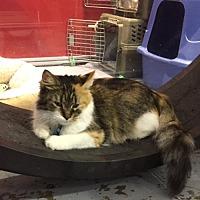 Adopt A Pet :: Pandora - Powell, OH