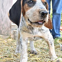 Adopt A Pet :: Gone with the Wind - Melanie - Fayette, MO