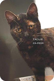 Domestic Shorthair Cat for adoption in Overland Park, Kansas - Tallie