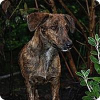 Adopt A Pet :: Mollie - Vancouver, BC